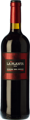 7,95 € Free Shipping | Red wine Arzuaga La Planta Joven D.O. Ribera del Duero Castilla y León Spain Tempranillo Bottle 75 cl | Thousands of wine lovers trust us to get the best price guarantee, free shipping always and hassle-free shopping and returns.