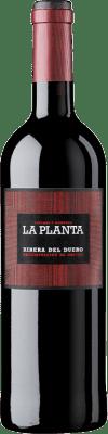 8,95 € Envío gratis | Vino tinto Arzuaga La Planta Joven D.O. Ribera del Duero Castilla y León España Tempranillo Botella 75 cl