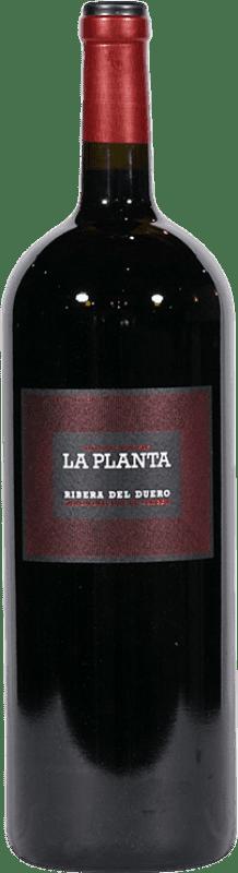 17,95 € Envío gratis | Vino tinto Arzuaga La Planta Joven D.O. Ribera del Duero Castilla y León España Tempranillo Botella Mágnum 1,5 L